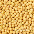 Best Price Superior Quality Cheap Wholesale Yellow Soybeans