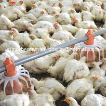 Equipamento da avicultura do conjunto completo da qualidade superior para a casa das aves domésticas