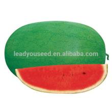 W04 Xinhongbao средняя зрелость китайского семена арбуза Ф1