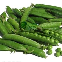 2015 New Crop Pea Pods Frozen