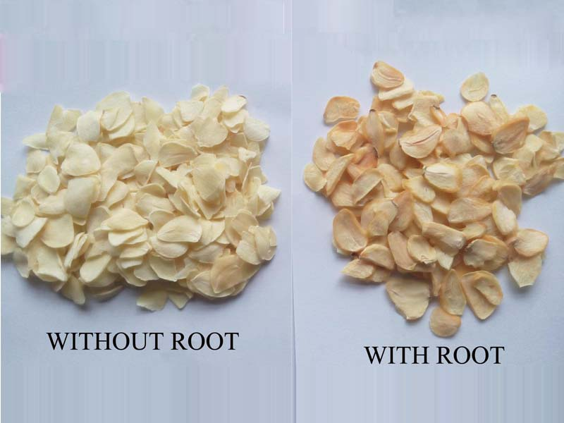 GARLIC FLAEKS WITHOUT ROOT COMPARE WITH ROOT