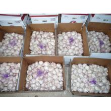 UAE Market Hot Sales 2016 Crop Fresh White Garlic