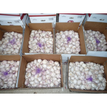 UAE Mercado Hot Sales 2016 Colheita Alho Branco Fresco