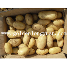 Holland Fresh Potato 2016 Nova Temporada