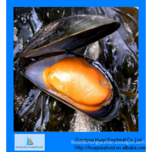 fresh frozen best quality enough half shell mussel
