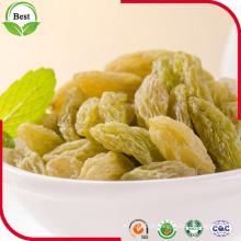 Boa qualidade Xinjiang Green Raisin para exportação
