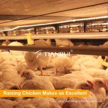 Equipamentos para avicultura A Gaiola de Frango com moldura para venda em Pilipinas