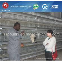 Beste Preis-automatische Schicht-Huhn-Geflügel-Halle mit Eiern in Algerien