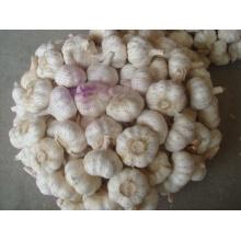 Neuer Ernte 5.0cm Normaler weißer Knoblauch