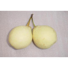 Good Quality of Ya Pear in the North