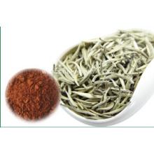 Natural Plant Extract Tea Polyphenol