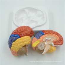 Excellent quality brain model cerebrum model