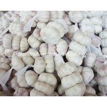 Fresh Normal White Garlic 3p