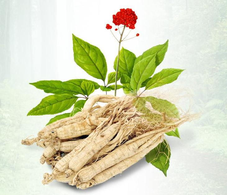 Chinese Medicine Ginseng Extract
