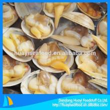 Top venda congelado fresco surf clam no shell