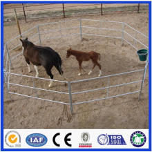 Trade Assurance Galvanized Pipe Livestock Metal Corral Fence Panels pour cheval