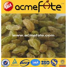 Mejor precio de primera calidad sin semillas \ pasas (de oro, verde, sultana, secado al sol)