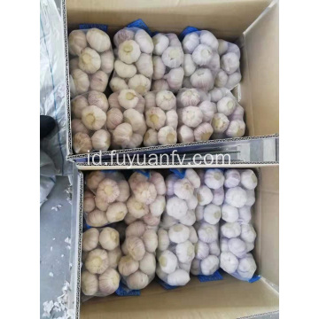 Jual bawang putih putih normal