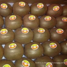 Экспорт свежих вкусных киви фруктов (25, 27, 30, 33, 36, 39)