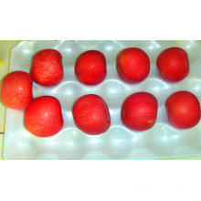 Export Fresh FUJI /Red Star Apple