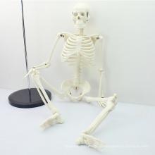 SKELETON06 (12366) медицинские науки классический медицинский Стандарт 85см Анатомия человека модель скелета манекена