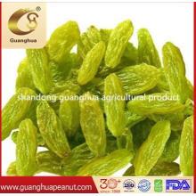 Factory Price High Quality Golden Raisin