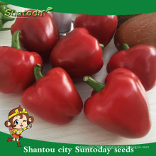 Suntoday vegetable Organic up where to buy veg home pepper chilli garden Chinese vegetable seeds catalogue for sale(21004)