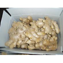2016 Rock Bottom Price Good Quality Fresh Ginger