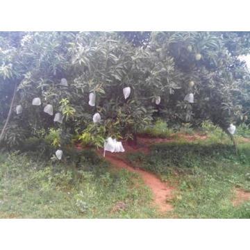 Mango Fruit Cover Polypropylene spundbond Non-Woven Fabric Bag