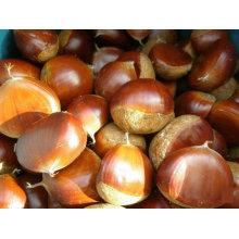 Fresh chinese chestnut