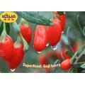 100% Ningxia Fresh Goji Juice--Wolfberry Juice