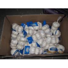 Nueva exportación de cultivos Chiese Good Quality Normal White Garlic