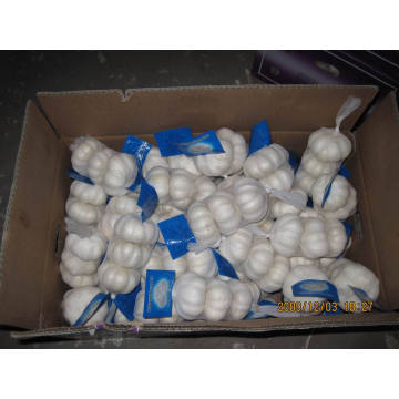 New Crop Export Chiese Good Quality Normal White Garlic