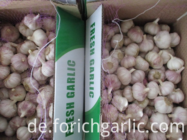 Fresh Jinxiang Normal White Garlic