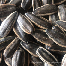 Sunflower Seeds 601 363 361 5009 for Egypt Iraq Turkey Iran, Dubai Uzbekistan import market