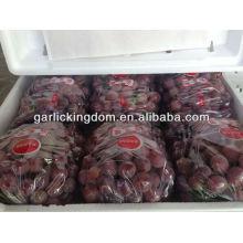 Yunnan fresh red global grape