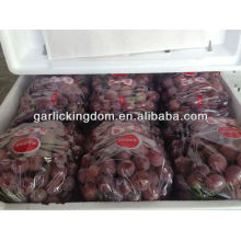 Yunnan fresco vermelho global uva