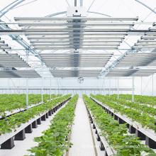 600W led grow light full spectrum led lamp for vertical farm plants