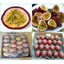 FRESH PASSION FRUITS/ SUPPLY FRESH PASSION FRUITS