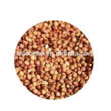 Sorgo vermelho de alta qualidade a granel com preço razoável e entrega rápida !!