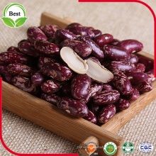 Vigna Type Red Speckled Kidney Beans