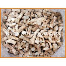 Chinese Exporter of Dried Mushroom Shiitake Leg