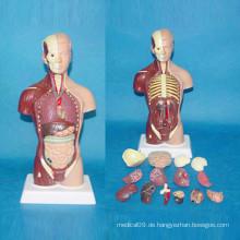 Hochwertige menschliche Anatomie Physiologie Skeleton Körperteile Modell (R030113)