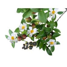 Terpinen-4-Ol, γ -Terpinene, Alpha- Terpinene Tea Tree Oil