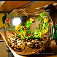 2020 New Design glass vases, air plant glass venus flytrap terrarium vase