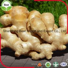 Chinesischer Fabrik-Verkaufs-natürlicher Wachstums-frischer Ingwer