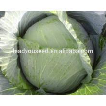 MC051 у минься раннее созревание гибридные китайские цены семян капусты