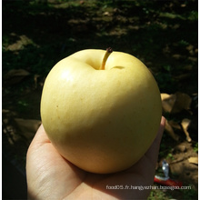 Fresh Gala / Golden Delicious / Red Chief Apple