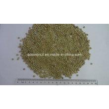 Gansu Origin Small Green Lentils