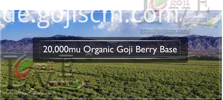 Conventional Goji Hot Sale base